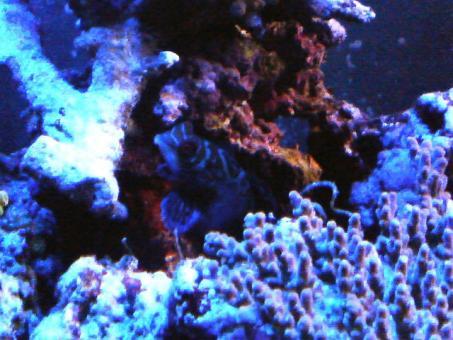 20060822tegu1.jpg