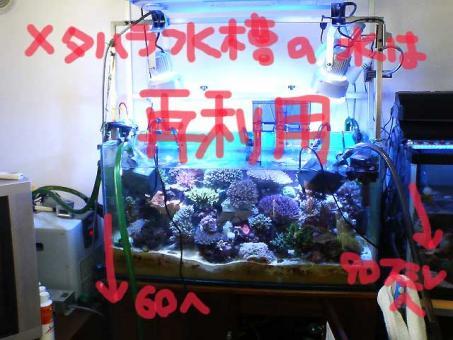 20061105sai.jpg