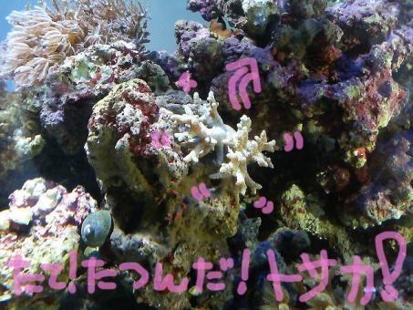 20061217tosaka.jpg
