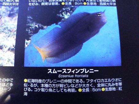 20070107sfb3.jpg