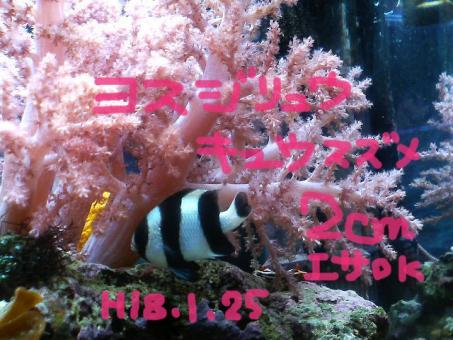 20070213yosu.jpg