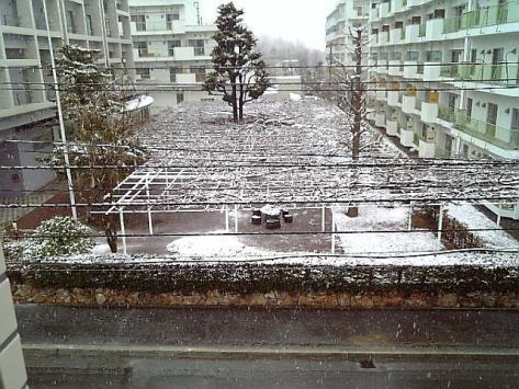 20070414yuki.jpg