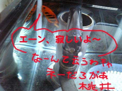 20070522momo1.jpg