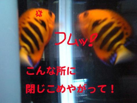 20070522momo2.jpg