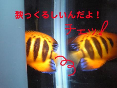20070522momo3.jpg