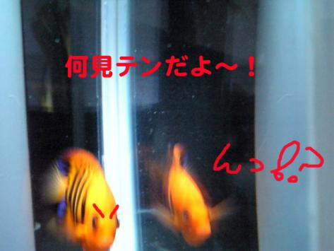 20070522momo4.jpg