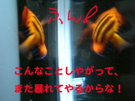 20070522momo5.jpg