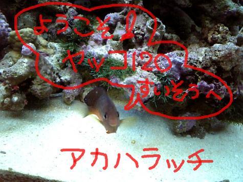20070911aka.jpg