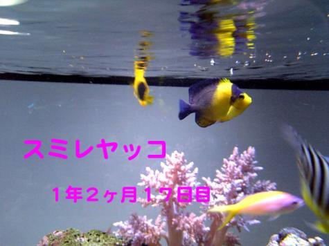 20070913sumire_20070913190322.jpg