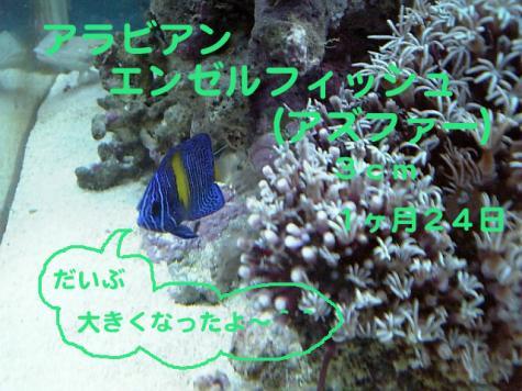 20070915azu.jpg