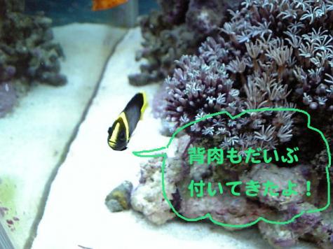 20070915hosi2.jpg