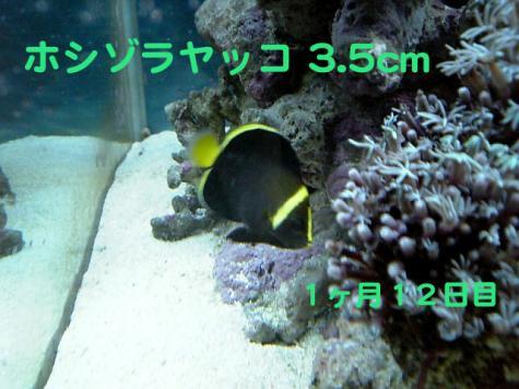 20070915hosi.jpg