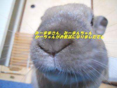 015_20110519120031.jpg