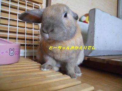 040_20110529110134.jpg