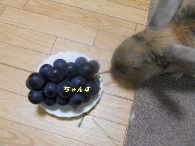 051_20110813143237.jpg