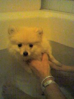 お風呂のLOVE。気持ち良さそうだね。