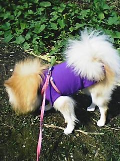 紫色の お洋服の LOVE