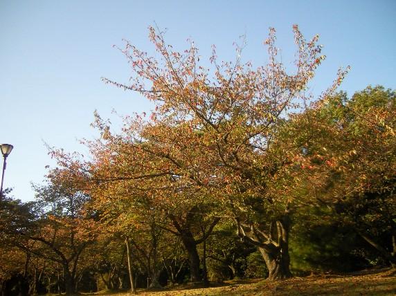 秋紅葉、、、落ち葉も?