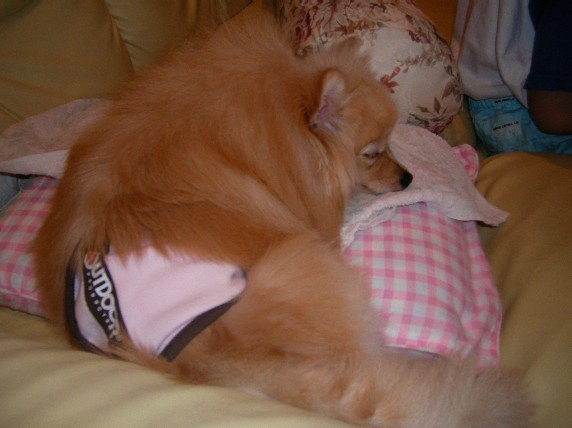 直ちゃんの冷え冷え枕を 陣取るLOVEね