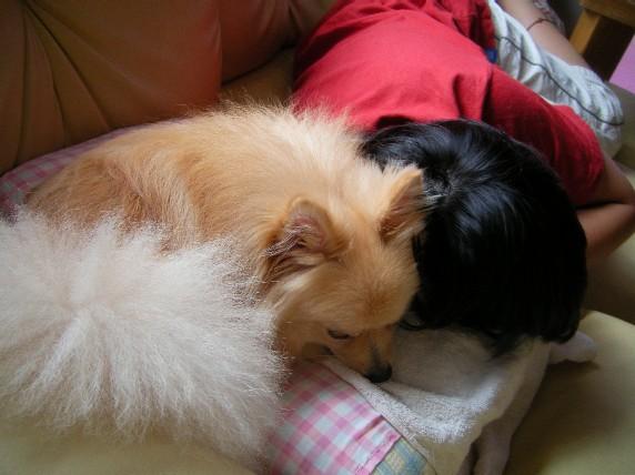 兄妹の仲の直ちゃんと仲良く冷えひえ枕を共にだね