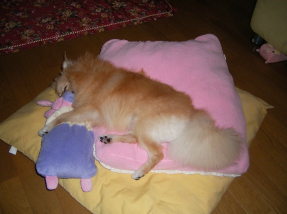 LOVEのお寝んねブタさん抱き枕