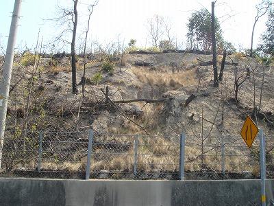 200703 直島 山火事跡