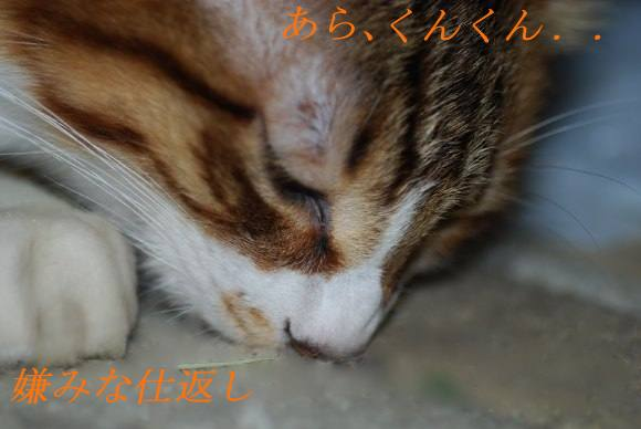 DSC_192905016.jpg