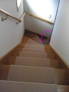 階段から覗くLuna