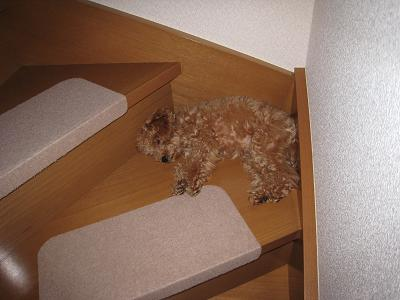 階段で寝る