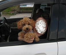 車窓から~