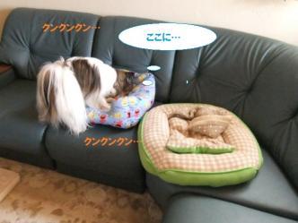 01-04_20110602131432.jpg