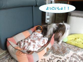 01-08_20110602131504.jpg