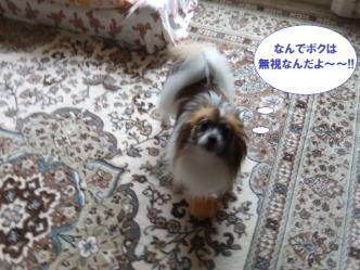 01-12_20110602135144.jpg