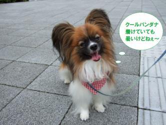 04-03_20110704115221.jpg