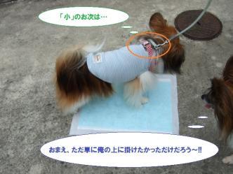 04-06_20110704115156.jpg