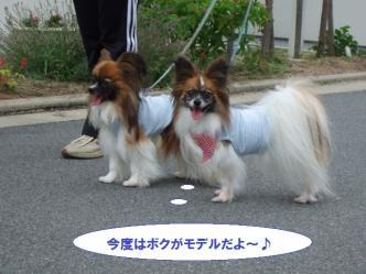 04-11_20110704115057.jpg