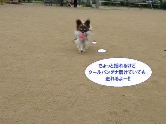 04-13_20110704115056.jpg