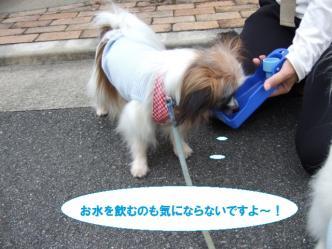04-15_20110704115055.jpg