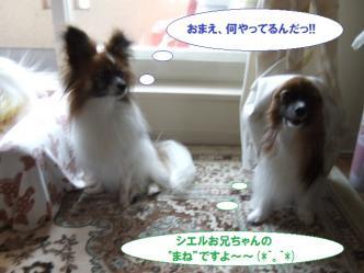 10-01_20110610202146.jpg