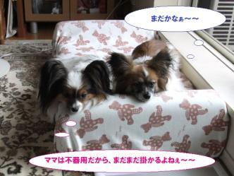 10-01_20110812071421.jpg