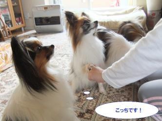 11-10_20110511172702.jpg