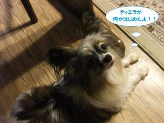 13-03_20110612232508.jpg