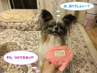 15-04_20110715213418.jpg