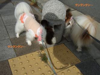 16-02_20110718093435.jpg