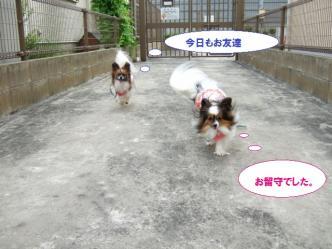 16-03_20110718093435.jpg