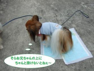 16-11_20110718093327.jpg