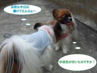 16-12_20110718093327.jpg