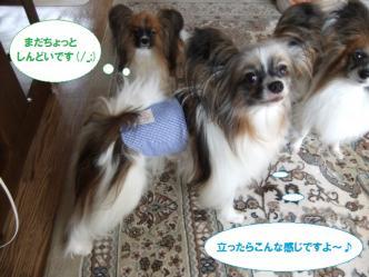 29-04_20110729175347.jpg