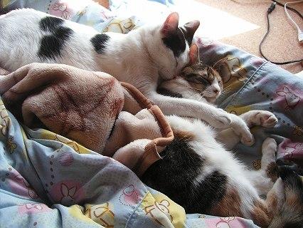 「お昼寝も一緒♪」