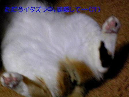 20070120043937.jpg